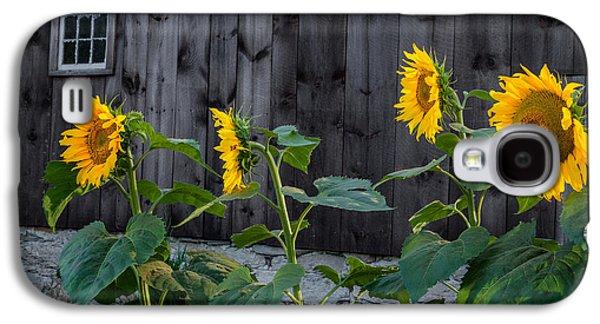 Sunflower Quartet Galaxy S4 Case by Bill Wakeley
