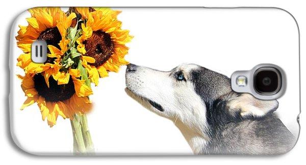 Husky Galaxy S4 Cases - Sunflower Galaxy S4 Case by Stephanie Laird