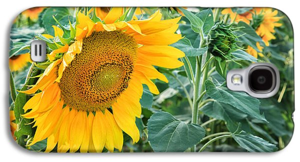 Close Focus Floral Galaxy S4 Cases - Sunflowers For Wishes Galaxy S4 Case by Bill  Wakeley