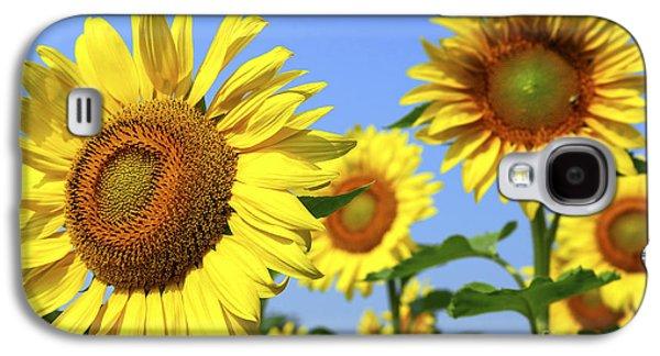 Sunflower Fields Galaxy S4 Cases - Sunflowers in field Galaxy S4 Case by Elena Elisseeva