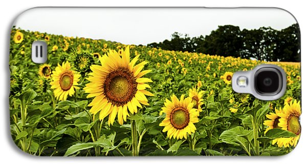 A Sunny Morning Galaxy S4 Cases - Sunflowers on a Hill Galaxy S4 Case by Christi Kraft