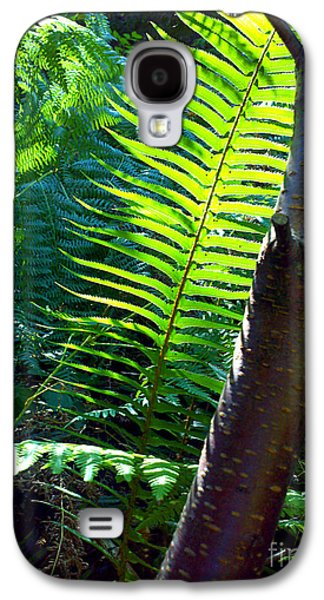 Fantasy Photographs Galaxy S4 Cases - Sunlit Fern Galaxy S4 Case by Shelly Weingart