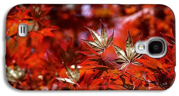 Abstract Nature Galaxy S4 Cases - Sunlit Japanese Maple Galaxy S4 Case by Rona Black