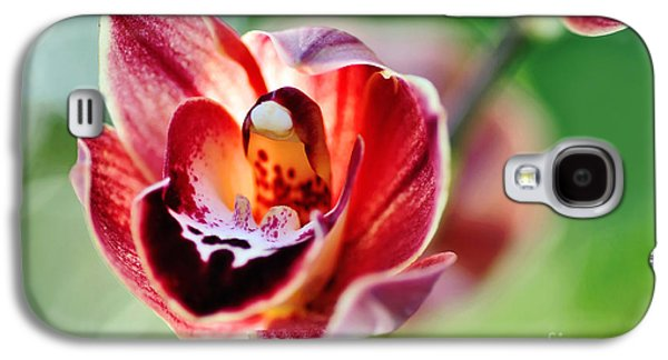 Sunlight On Flowers Galaxy S4 Cases - Sunlit Miniature Orchid Galaxy S4 Case by Kaye Menner