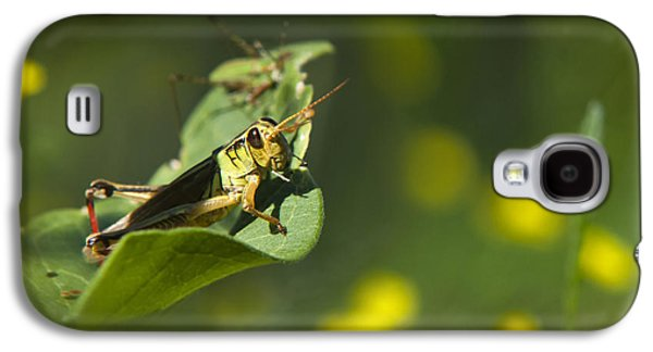 Sunny Green Grasshopper Galaxy S4 Case by Christina Rollo