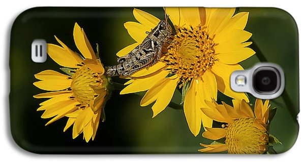 Sunny Hopper Galaxy S4 Case by Ernie Echols