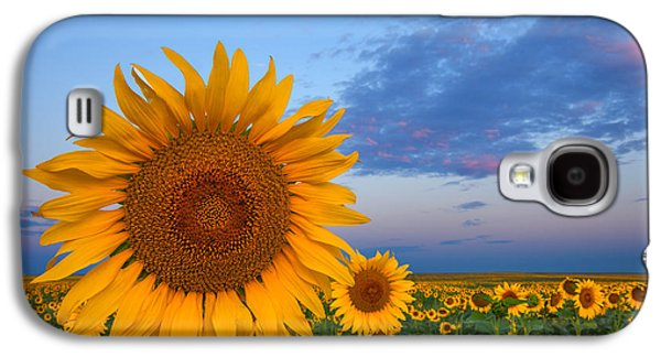 Sunflower Field Galaxy S4 Cases - Sunny Side Up Galaxy S4 Case by Darren  White