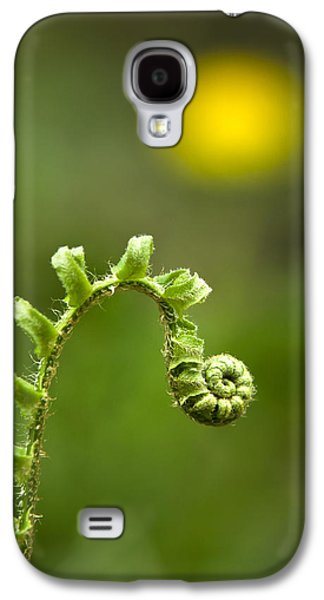 Abstract Nature Galaxy S4 Cases - Sunrise Spiral Fern Galaxy S4 Case by Christina Rollo