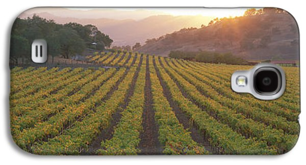Winery Photography Galaxy S4 Cases - Sunset, Vineyard, Napa Valley Galaxy S4 Case by Panoramic Images