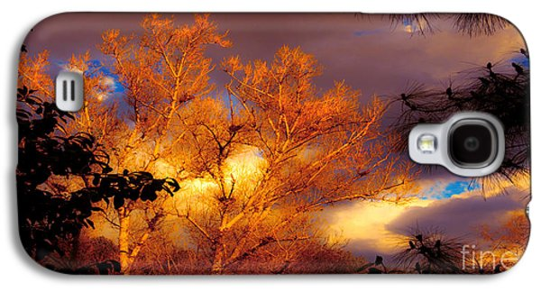 Landscapes Photographs Galaxy S4 Cases - Sunshine On The Tree Tops After A Rain Storm  Galaxy S4 Case by Jerry Cowart