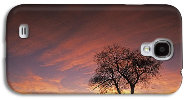 Contour Farming Galaxy S4 Cases - Susies Tree Galaxy S4 Case by Latah Trail Foundation