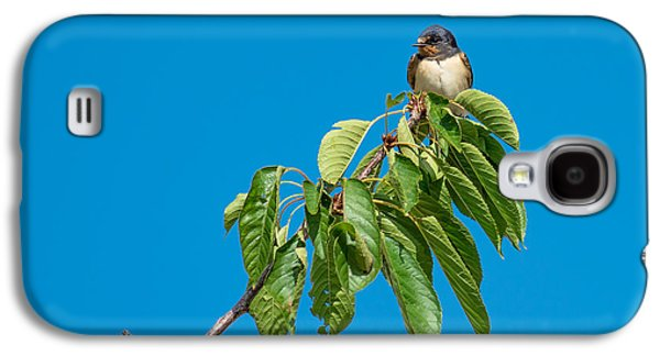 Hirundo Rustica Galaxy S4 Cases - Swallow Sitting On Cherry Tree Branch Galaxy S4 Case by Andreas Berthold