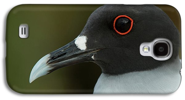 Swallow-tailed Gull (larus Furcatus Galaxy S4 Case by Pete Oxford