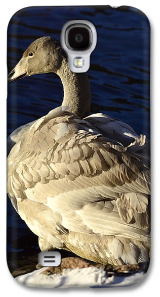 Swan Pair Galaxy S4 Cases - Swan sits and looks out over the lake Galaxy S4 Case by Toppart Sweden