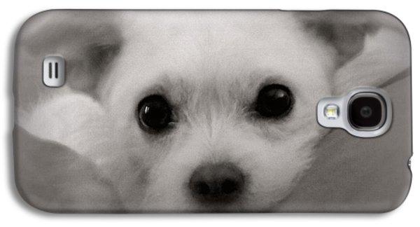 Dog Framed Prints Digital Art Galaxy S4 Cases - Sweet Angel Galaxy S4 Case by Sheri McLeroy