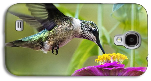 Hovering Galaxy S4 Cases - Sweet Success Hummingbird Square Galaxy S4 Case by Christina Rollo