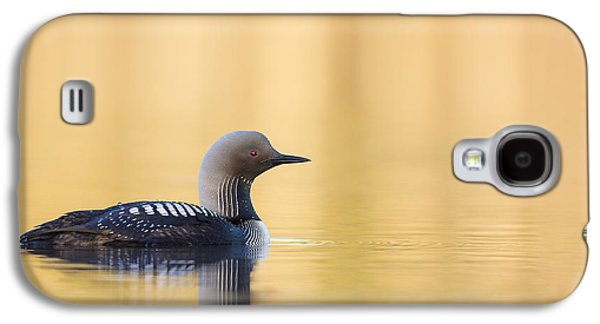 Loon Galaxy S4 Cases - Swimming on a Lake of Gold Galaxy S4 Case by Tim Grams