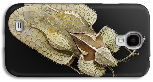 Sycamore Lace Bug Sem Galaxy S4 Case by Albert Lleal