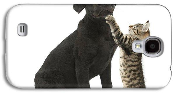 Mixed Labrador Retriever Galaxy S4 Cases - Tabby Male Kitten & Black Labrador Galaxy S4 Case by Mark Taylor