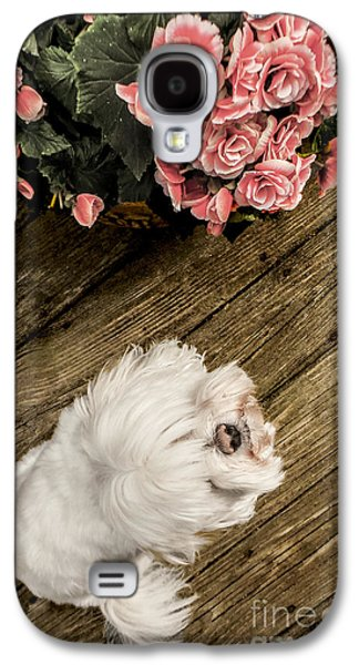 Puppy Digital Art Galaxy S4 Cases - Havanese Puppy Galaxy S4 Case by Charlie Cliques