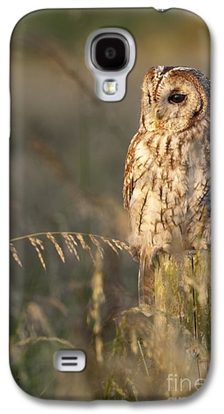 Tawny Owl Galaxy S4 Case by Tim Gainey