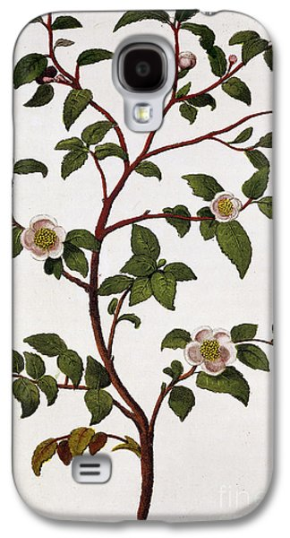 Camellia Galaxy S4 Cases - Tea Branch of Camellia sinensis Galaxy S4 Case by Anonymous