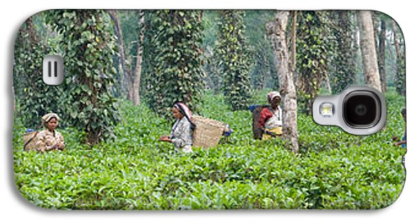Tea Harvesting, Assam, India Galaxy S4 Case by Panoramic Images