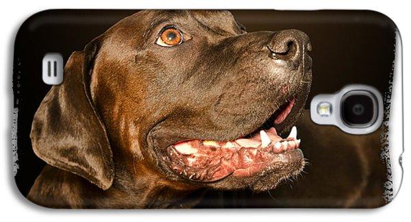 Boxer Digital Art Galaxy S4 Cases - Tex the Dog Galaxy S4 Case by Harold Bonacquist