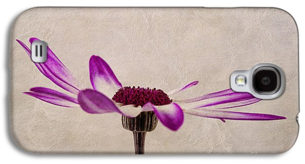 Close Focus Floral Galaxy S4 Cases - Texturised Senetti pericallis Galaxy S4 Case by John Edwards
