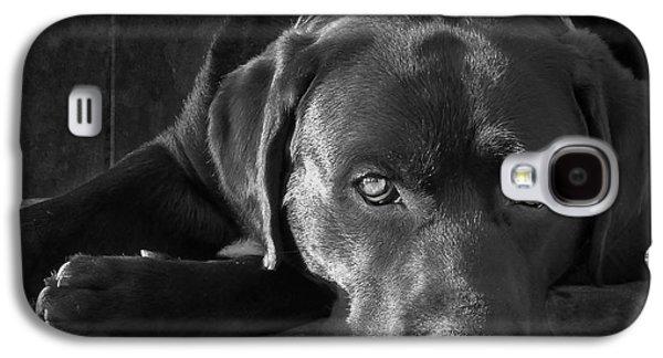 Black Dog Galaxy S4 Cases - That Loving Gaze Galaxy S4 Case by Larry Marshall