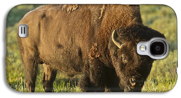 Bison Pyrography Galaxy S4 Cases - The American buffalo Galaxy S4 Case by Pedro Delmas