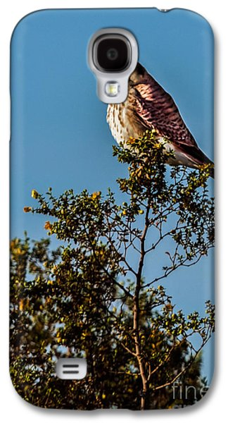 Slash Galaxy S4 Cases - The American Kestrel  Galaxy S4 Case by Robert Bales