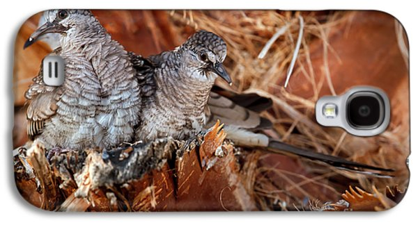 Haybale Galaxy S4 Cases - The Baby Inca Doves Galaxy S4 Case by Robert Bales