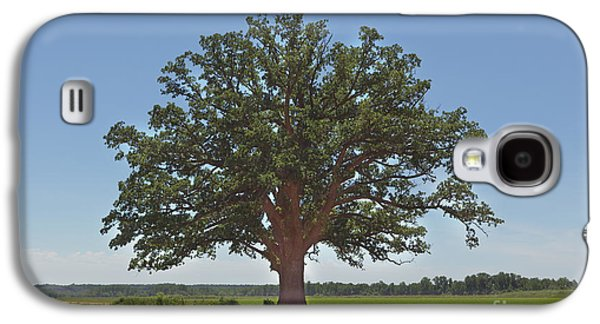 The Big Tree Galaxy S4 Case by Kay Pickens