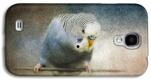 The Budgie Collection - Budgie 3 Galaxy S4 Case by Jai Johnson