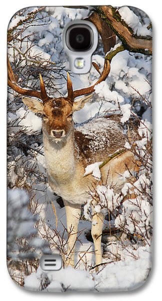 Wintertime Galaxy S4 Cases - The Christmas Deer - Fallow Deer in the Snow Galaxy S4 Case by Roeselien Raimond