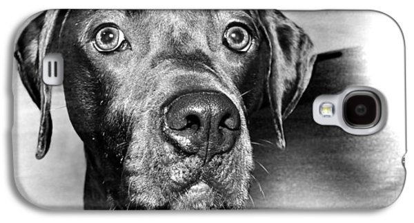 Dogs Digital Galaxy S4 Cases - The Dog Rocco Galaxy S4 Case by Harold Bonacquist