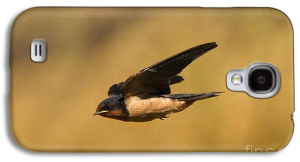 Swallow Galaxy S4 Cases - First Swallow Of Spring Galaxy S4 Case by Robert Frederick