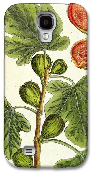 Food And Beverage Drawings Galaxy S4 Cases - The Fig Tree Galaxy S4 Case by Elizabeth Blackwell