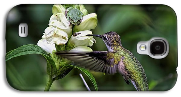 Flying Frog Galaxy S4 Cases - The Frog And The Hummingbird Galaxy S4 Case by Ron Grafe