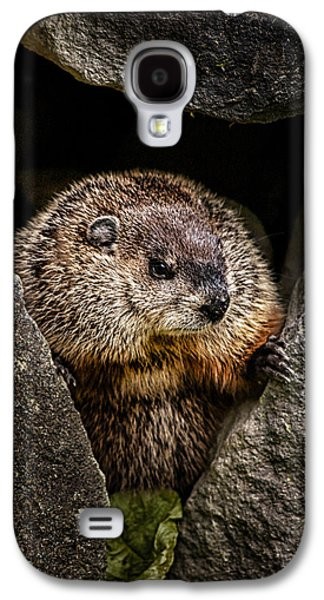 Biology Photographs Galaxy S4 Cases - The Groundhog Galaxy S4 Case by Bob Orsillo