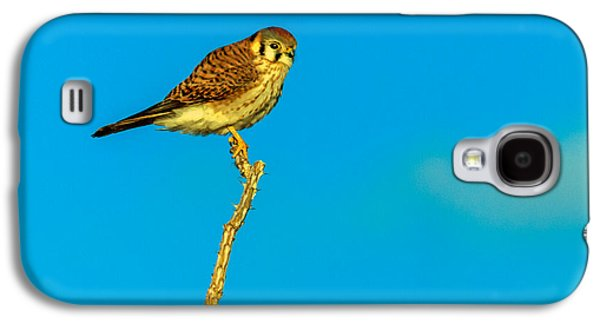 Slash Galaxy S4 Cases - The Kestrel Galaxy S4 Case by Robert Bales
