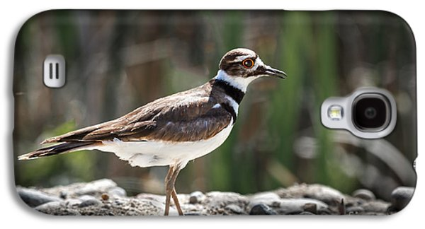The Killdeer Galaxy S4 Case by Robert Bales