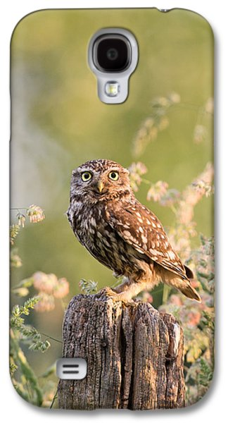 Frontal Galaxy S4 Cases - The Little Owl Galaxy S4 Case by Roeselien Raimond