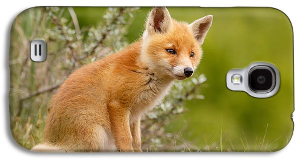 Red Fox Galaxy S4 Cases - The New Kit ...Curious Red Fox Cub Galaxy S4 Case by Roeselien Raimond