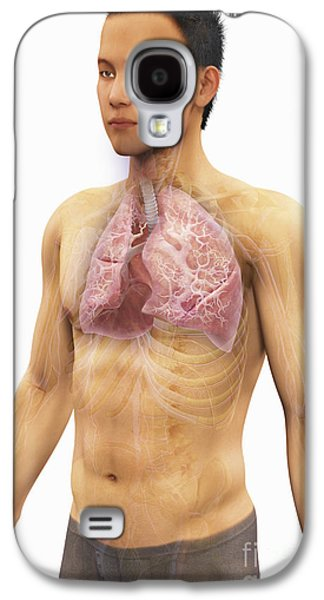 Internal Organs Galaxy S4 Cases - The Respiratory System Galaxy S4 Case by Science Picture Co