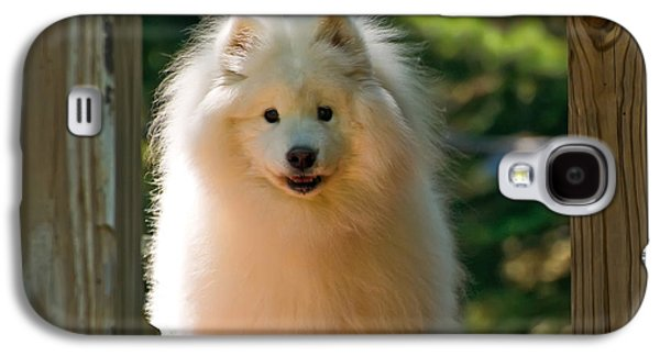 The Samoyed Smile Galaxy S4 Case by Lois Bryan