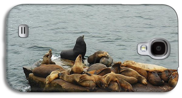 Harem Photographs Galaxy S4 Cases - The Sea Lion and His Harem Galaxy S4 Case by Mary Machare