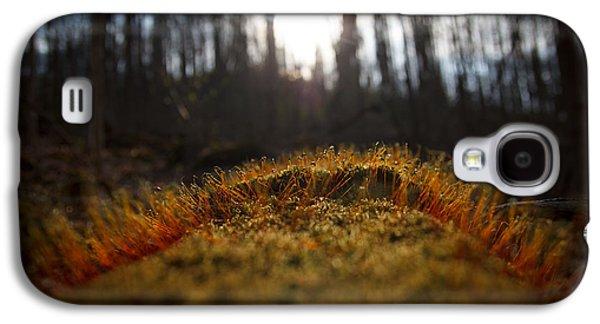 Moss Galaxy S4 Cases - The setting sun Galaxy S4 Case by Shane Holsclaw