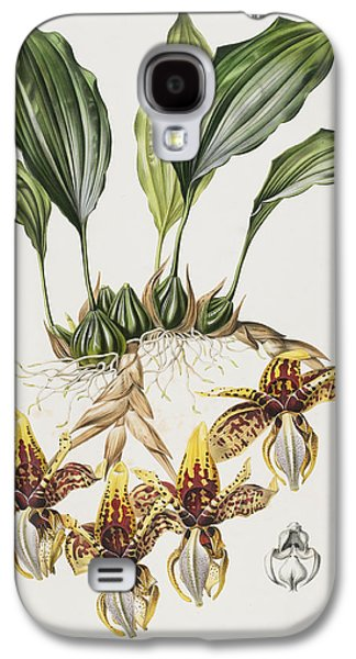 Spring Bulbs Paintings Galaxy S4 Cases - The Stanhope Tiger Orchid Galaxy S4 Case by Maxim Gauci
